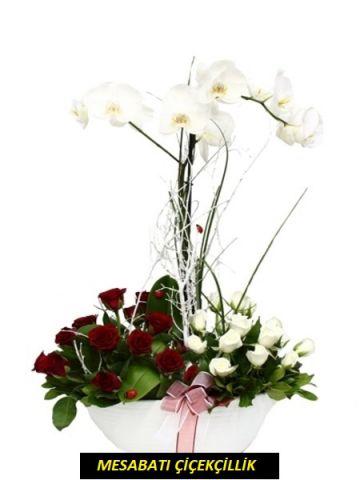 Kırmızı Beyaz Güllü Orkide