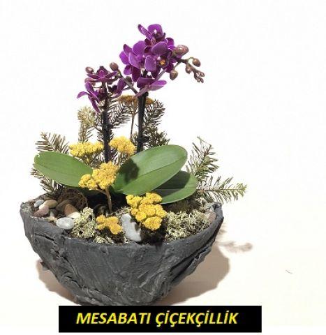 Seramik Vazoda Mor Mini Orkide