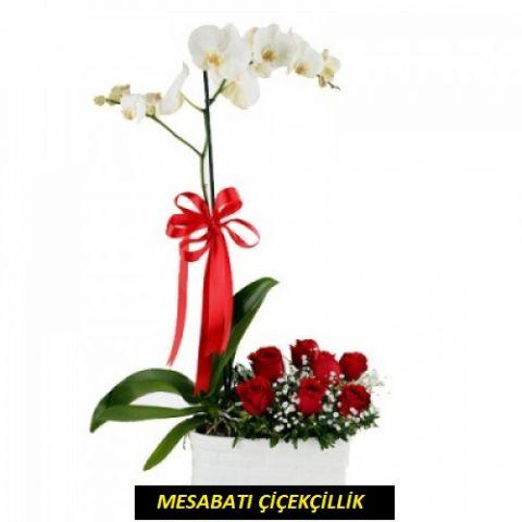 7 Güllü Tekli Orkide