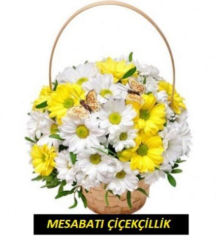 Sepette Sarı&Beyaz Papatya